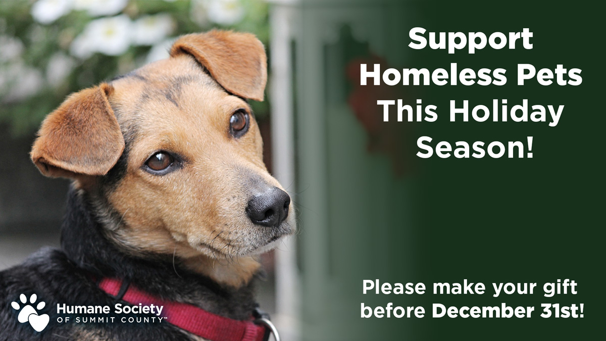 Support homeless pets this holiday season! Please make your gift before December 31st!